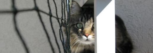 securit chats s rl sp cialis e en cl tures antichute et antifugue pour chats depuis 10 ans. Black Bedroom Furniture Sets. Home Design Ideas